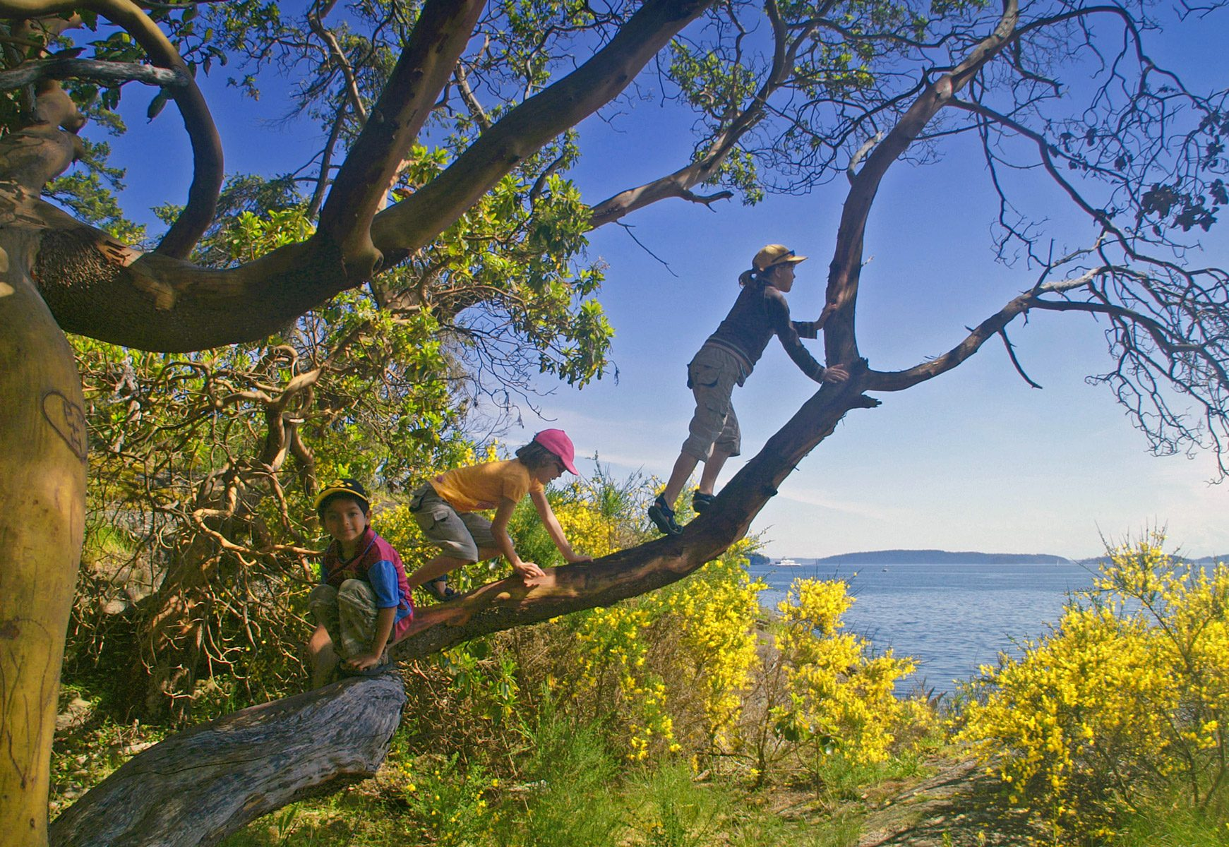 The best trees to climb...