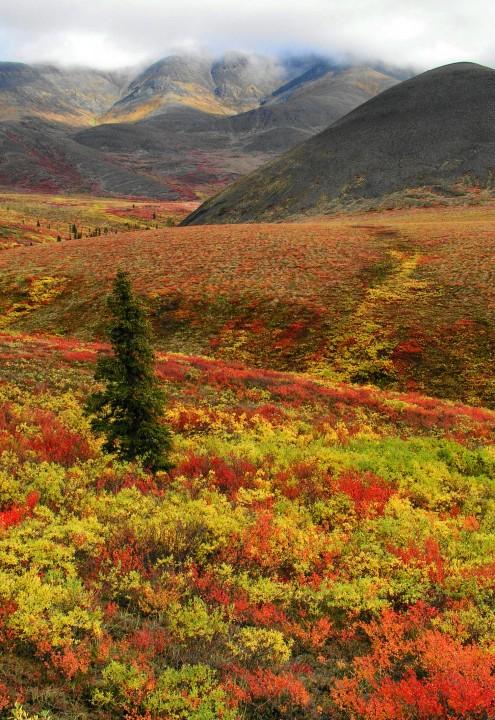 Dempster Highway, Yukon - Didier Delahaye