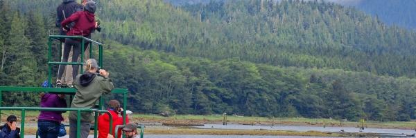 Knight Inlet bear watching