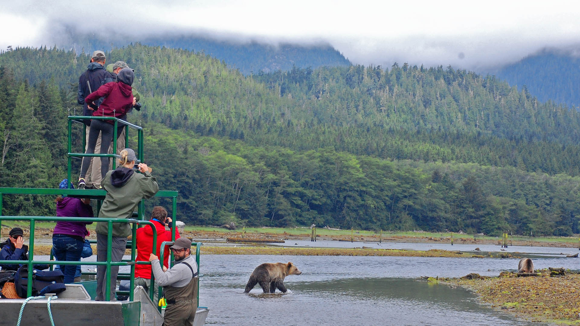 Knight Inlet bear watching