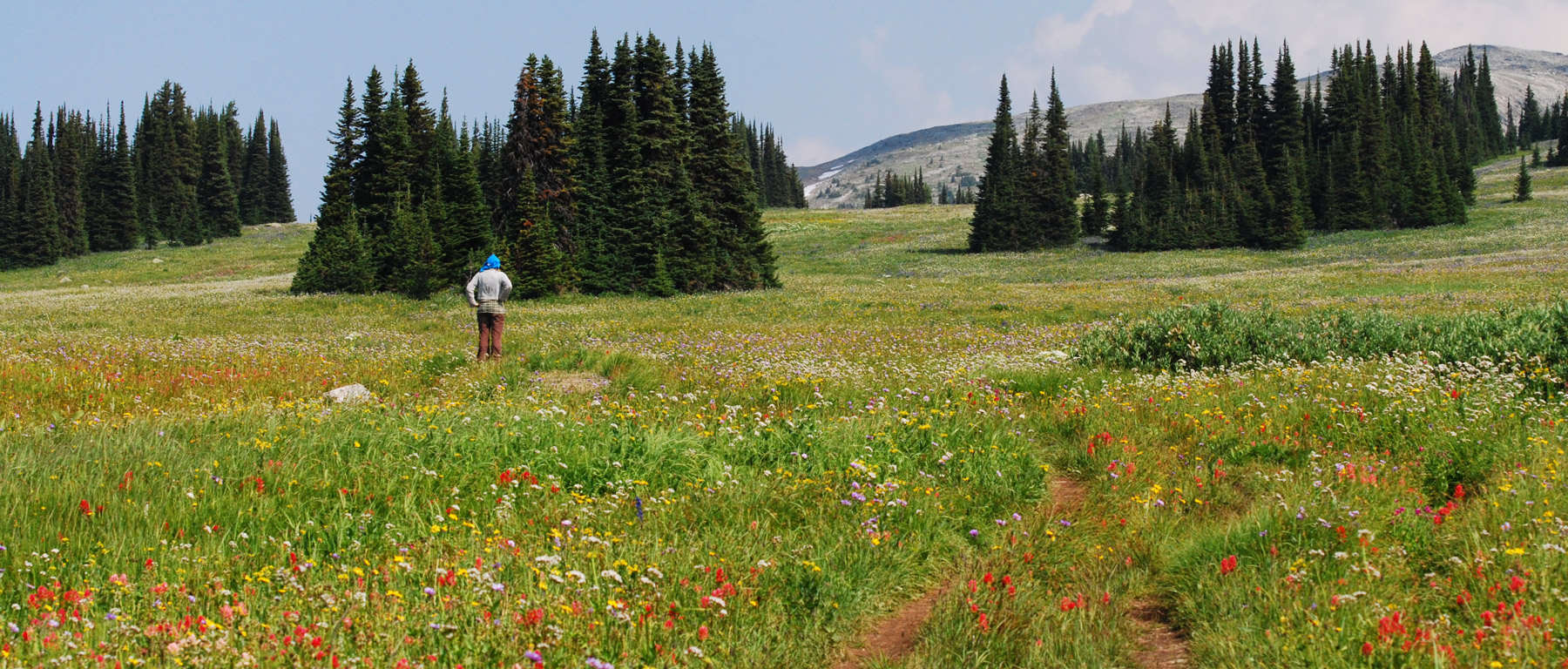 Wildflower field in Manning Park, BC