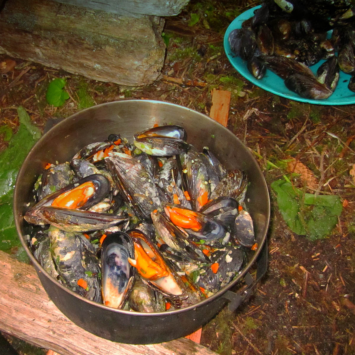 Mussels feast, BC coast
