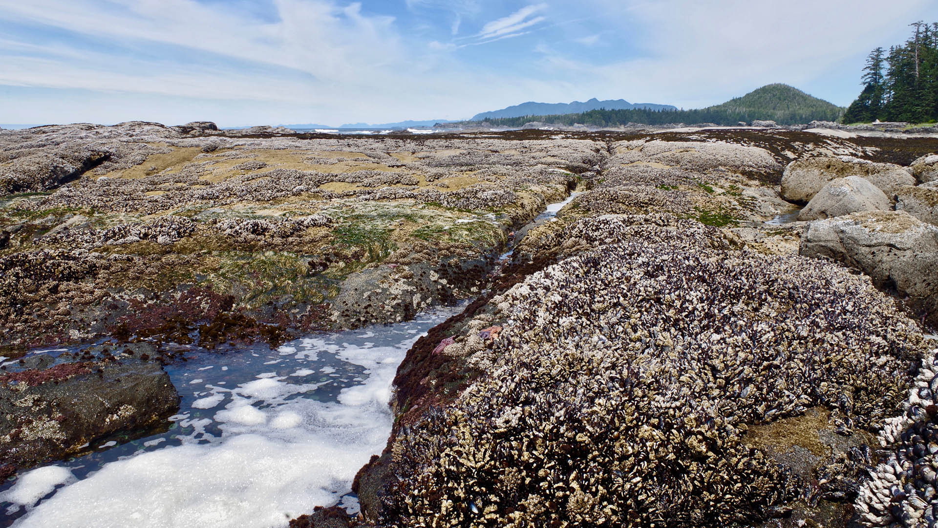 Wild mussels - Nootka Island with Nature Trek Canada
