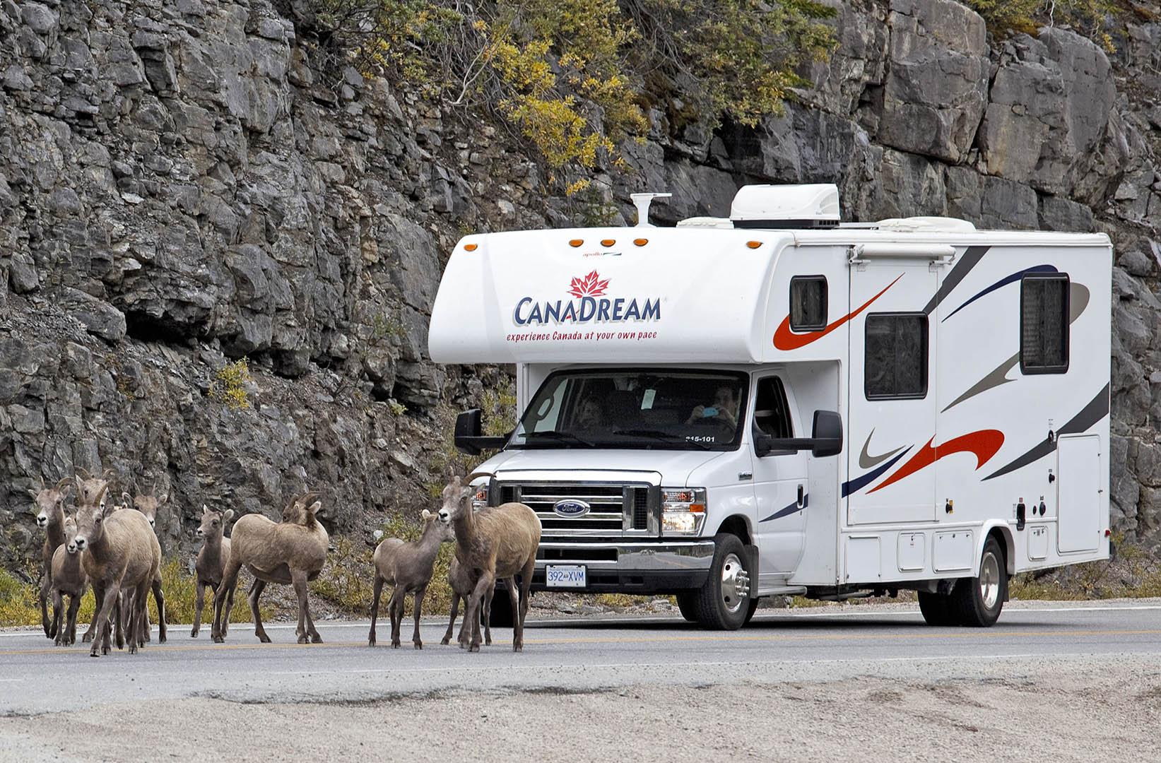 Traffic Jam in the Rockies