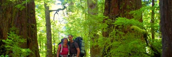Temperate rainforest in Nootka Island