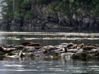 Kayaking with the seals