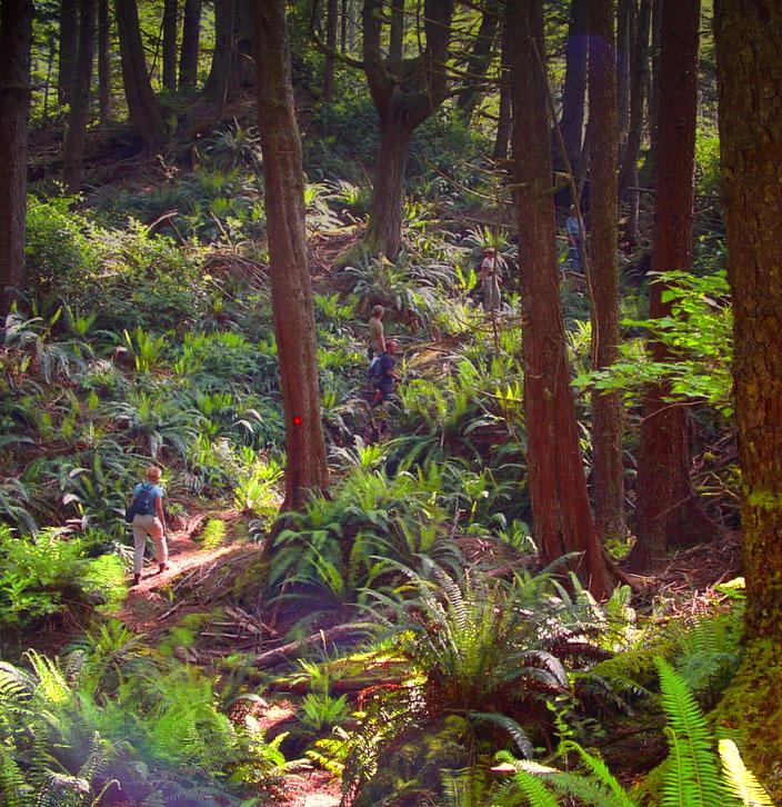 Juan de Fuca forest