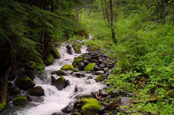 Strathcona Provincial Park, Vancouver Island