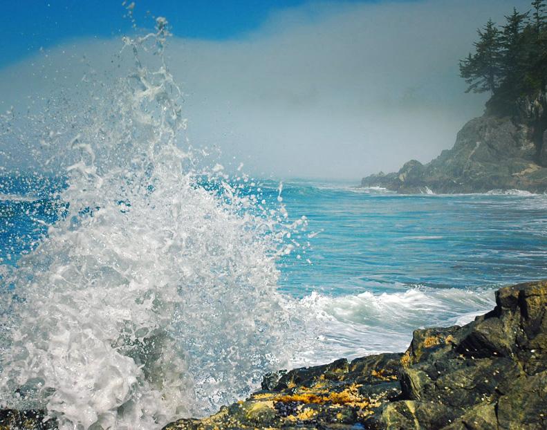 Nootka Island shore